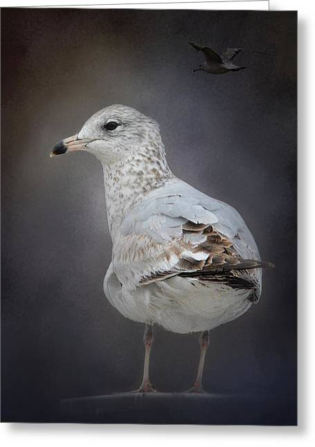 Sea Birds Greeting Cards - Perched Nearby Greeting Card by Jai Johnson