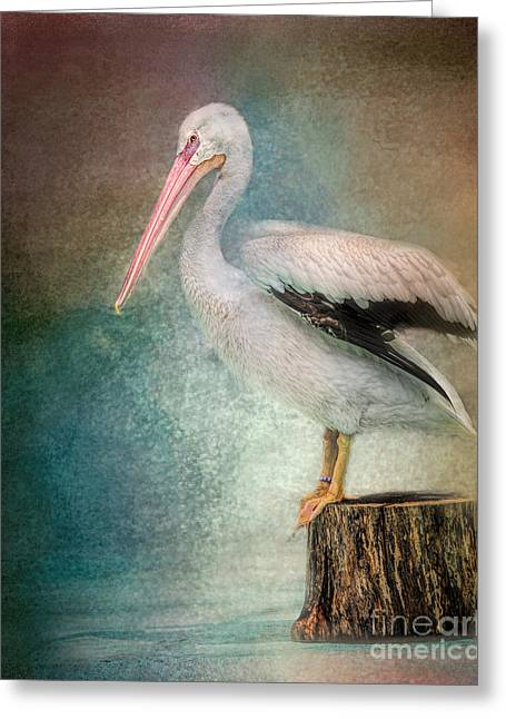 Waterbird Greeting Cards - Perched Pelican Greeting Card by Jai Johnson
