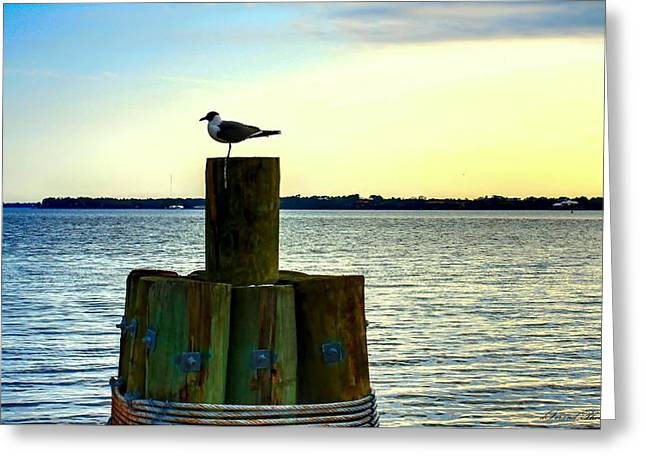 Perched Seagull Greeting Card by Debra Forand