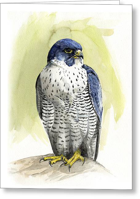 Peregrine Falcon Greeting Cards - Peregrine Greeting Card by Chris Pendleton