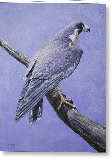 Birds. Birds Of Prey Greeting Cards - Peregrine Falcon Greeting Card by Crista Forest