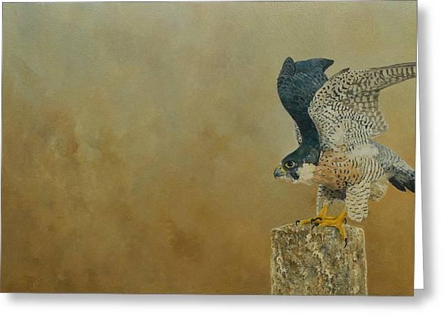 Natuur Greeting Cards - Peregrine Falcon  Greeting Card by Erna Goudbeek