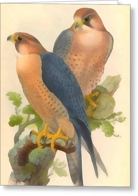Migratory Bird Greeting Cards - Peregrine Falcon Greeting Card by John Gould