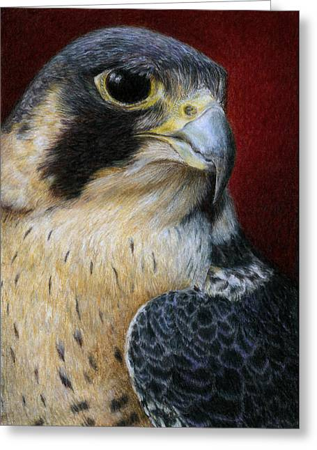 Pencil Greeting Cards - Peregrine Falcon Greeting Card by Pat Erickson