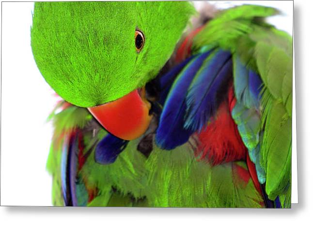 Perfect Bird Greeting Card by Crystal Wightman