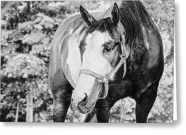 Horse Images Drawings Greeting Cards - Perfect Bliss Greeting Card by Kathryn Hansen