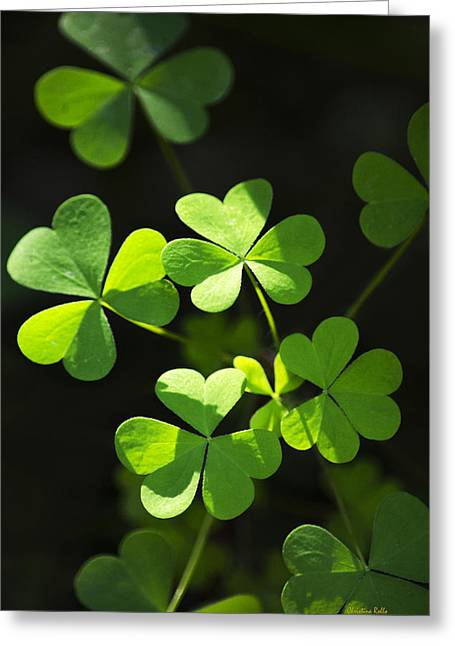 Perfect Green Shamrock Clovers Greeting Card by Christina Rollo