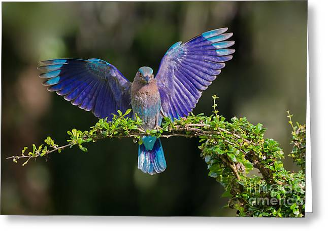Iridescence Greeting Cards - Perfect Landing Greeting Card by Ashley Vincent