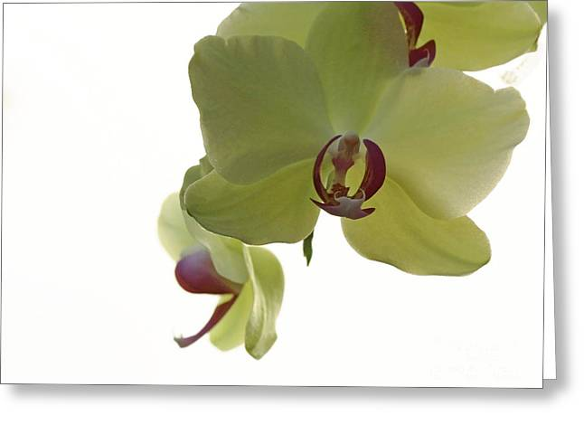 Shelley Myke Greeting Cards - Perfect Moments Orchid  Greeting Card by Inspired Nature Photography By Shelley Myke