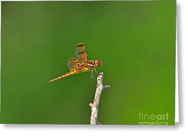 Dragon Fly Photo Greeting Cards - Perfect Painted Greeting Card by Al Powell Photography USA