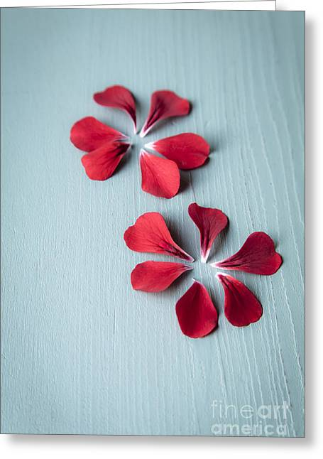 Jan Bickerton Greeting Cards - Perfect Petals Greeting Card by Jan Bickerton