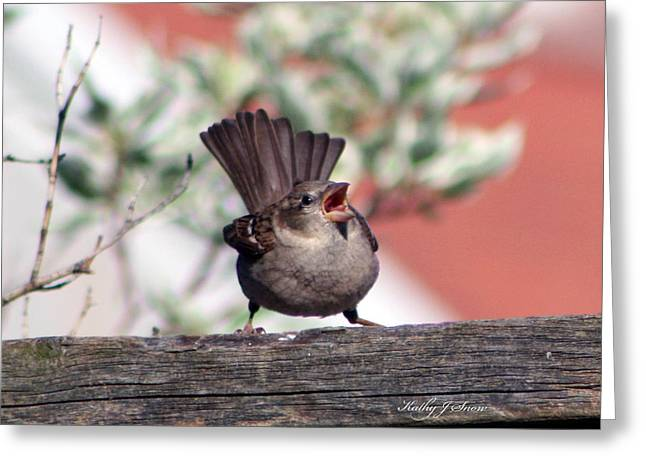 Perfect Pitch And Poise Greeting Card by Kathy J Snow