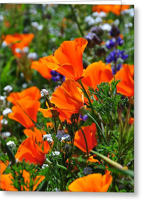 Recently Sold -  - Reserve Greeting Cards - Perfect Poppies Greeting Card by Lynn Bauer