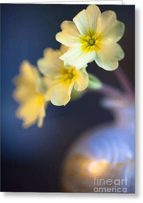 Primroses Greeting Cards - Perfect Primrose Greeting Card by Jan Bickerton