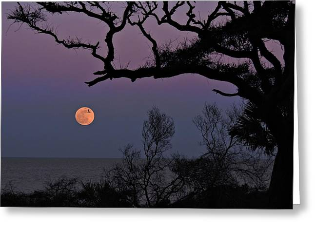 Sea Moon Full Moon Greeting Cards - Perfect Timing Greeting Card by Laura Ragland