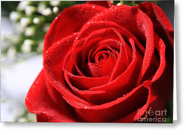 Love Me Tender Greeting Cards - Perfection Rose Greeting Card by Cheryl Young