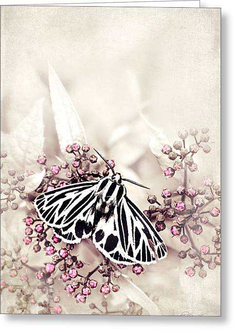 Imperfect Greeting Cards - Perfectly Imperfect  Greeting Card by Renee Dawson