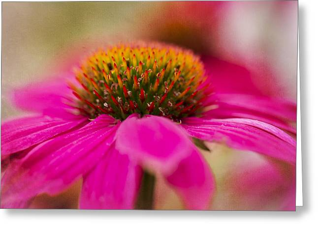 Botanical Greeting Cards - Perfectly Pink. Greeting Card by Clare Bambers