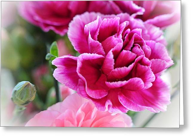 Pink Carnations Greeting Cards - Perfectly pink Greeting Card by Sharon Lisa Clarke