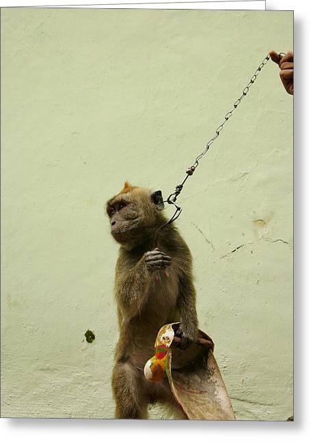 Performing Monkey Greeting Cards - Performing Monkey In Indonesia Greeting Card by Ubud High