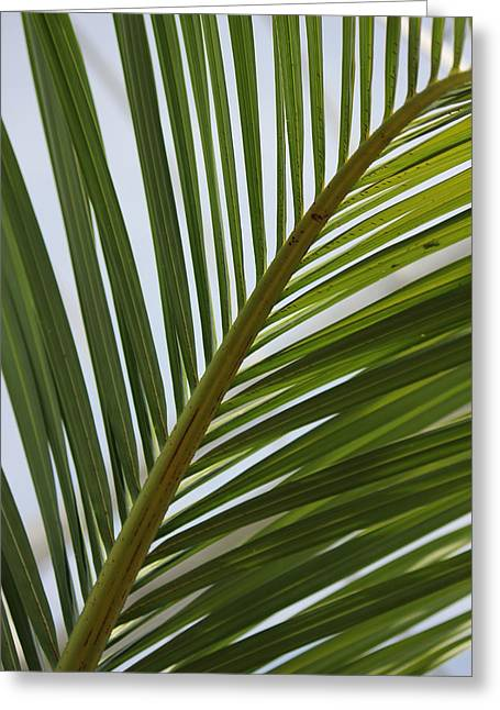 Bamboo Fence Greeting Cards - Peridot 3 Greeting Card by Angelique Francis