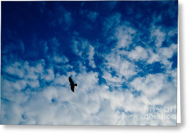 Peregrine Falcon Greeting Cards - Perigrine Falcon Soaring Greeting Card by Dean Harte