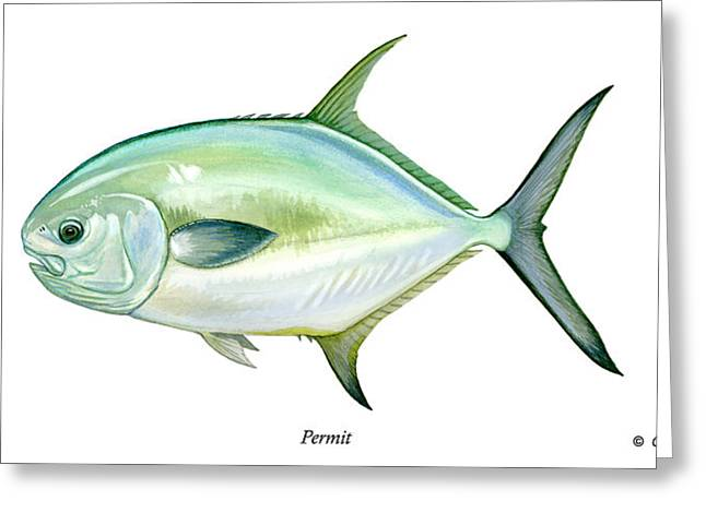 Flyfish Greeting Cards - Permit Greeting Card by Charles Harden