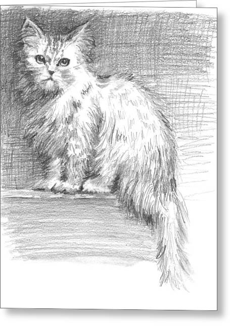 Residential Drawings Greeting Cards - Persian Cat Greeting Card by Sarah Parks