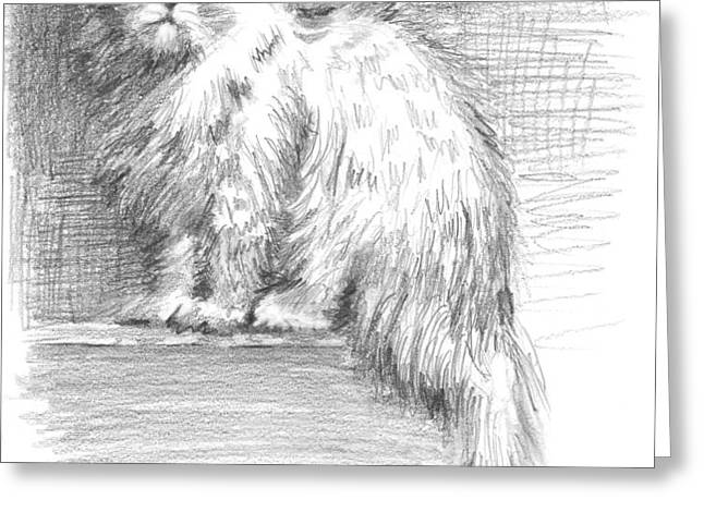 Persian Cat Greeting Card by Sarah Parks