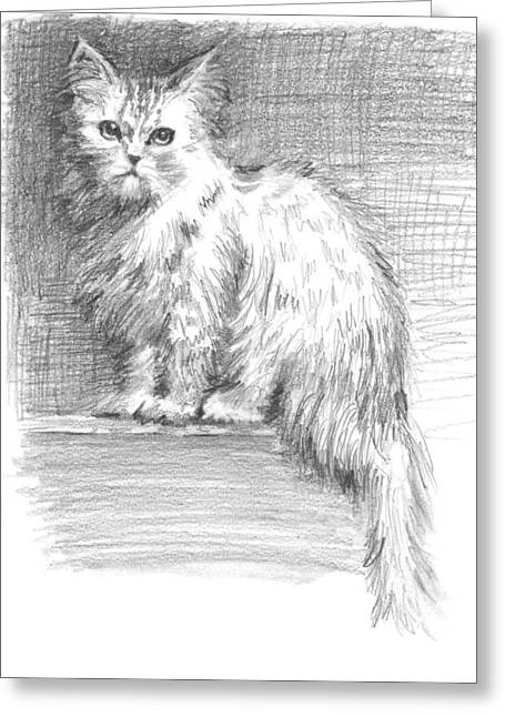 Office Space Drawings Greeting Cards - Persian Cat Greeting Card by Sarah Parks