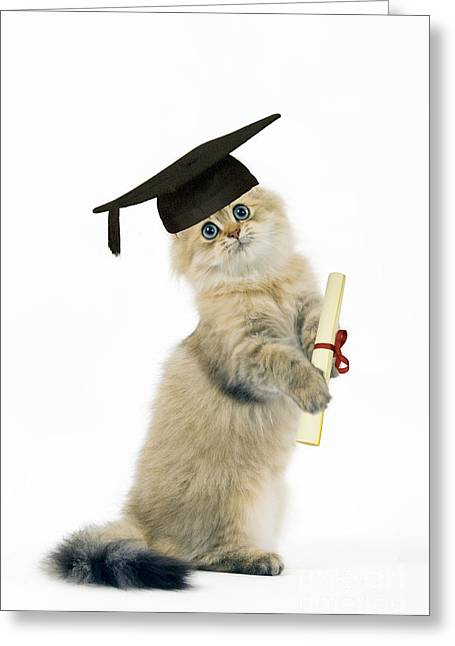 Clever Greeting Cards - Persian Cat With Diploma Greeting Card by Jean-Michel Labat