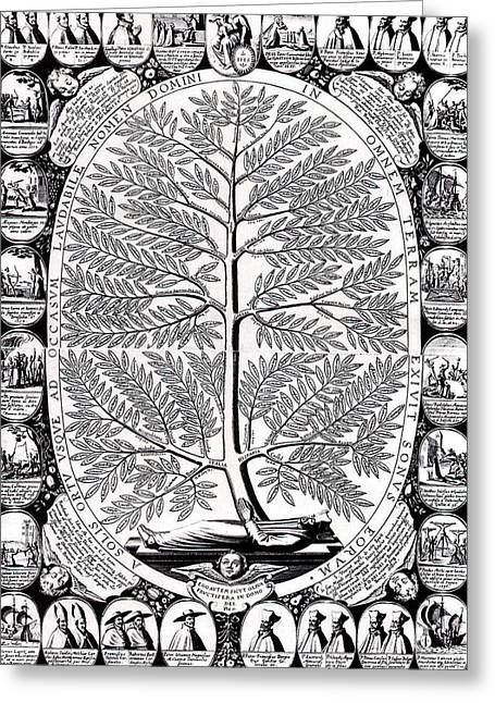 Peruvian Bark Greeting Cards - Peruvian Bark or Jesuit Tree Greeting Card by Unknown