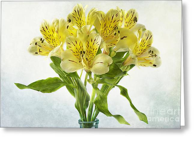 Alstroemeria Greeting Cards - Peruvian Lilies Greeting Card by Jacky Parker