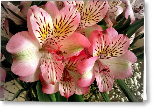 Lily Of The Incas Greeting Cards - Peruvian Lilies Greeting Card by Bishopston Fine Art
