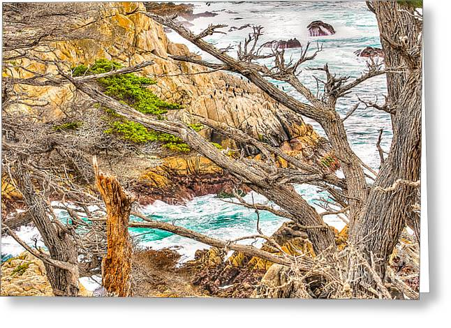 Pescadero Greeting Cards - Pescadero Point Greeting Card by Jim Carrell