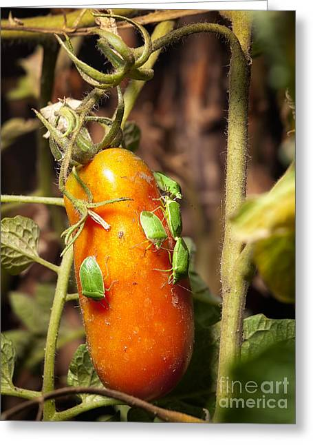 Agronomy Greeting Cards - Pest attack Greeting Card by Sinisa Botas