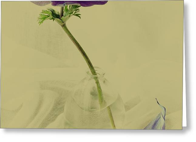 Glass Vase Photographs Greeting Cards - Petal Greeting Card by Constance Fein Harding