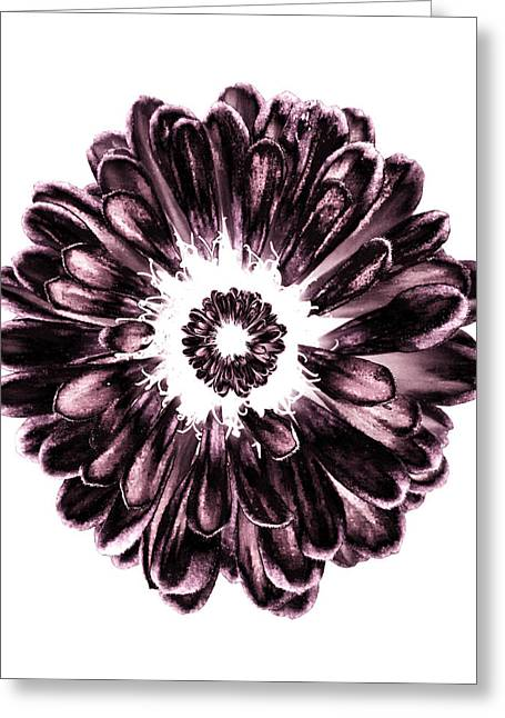 Contemporary Pyrography Greeting Cards - Petal Explosion  Greeting Card by Fabien White