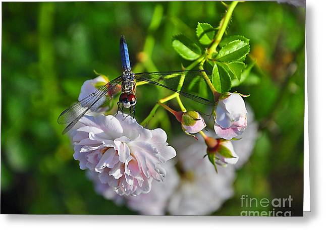 Dragon Fly Photo Greeting Cards - Petal Perch Greeting Card by Al Powell Photography USA