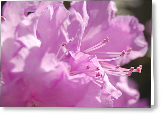 First Love Greeting Cards - Petal Pink by jrr Greeting Card by First Star Art