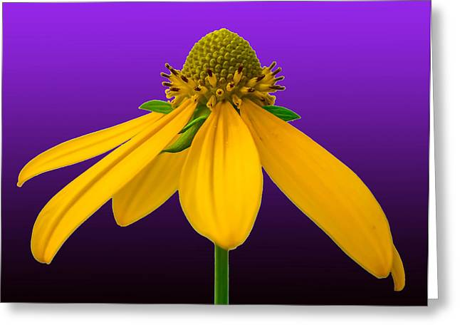 Abloom Greeting Cards - Petal Power  Greeting Card by Brian Stevens