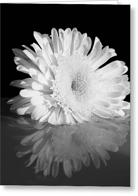 Daysray Photography Greeting Cards - Petal Reflections Greeting Card by Fran Riley