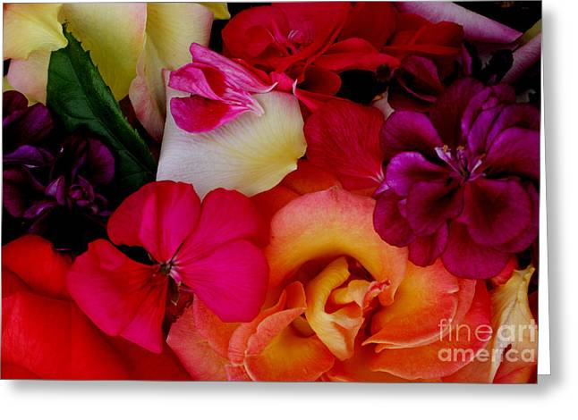 Pinks And Purple Petals Photographs Greeting Cards - Petal River Greeting Card by Jeanette French