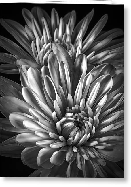 Petaled Black Greeting Card by Bill Tiepelman
