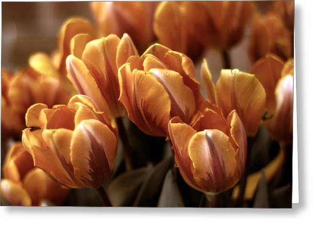 Tulip Petals Greeting Cards - Golden Delight Greeting Card by Jessica Jenney