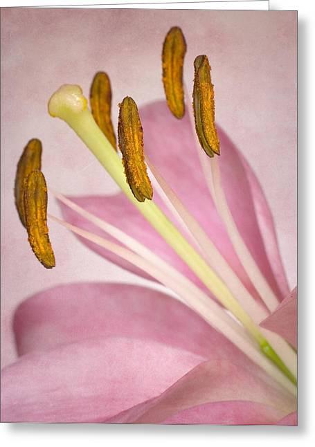 Lili Greeting Cards - Petals and Company Greeting Card by David and Carol Kelly