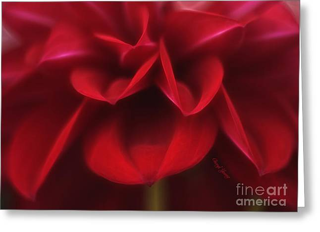 Reception Greeting Cards - Petals Greeting Card by Cheryl Young