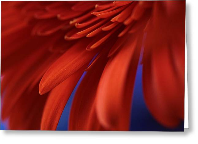 Flower Fine Art Photography Greeting Cards - Petals Greeting Card by Connie Handscomb