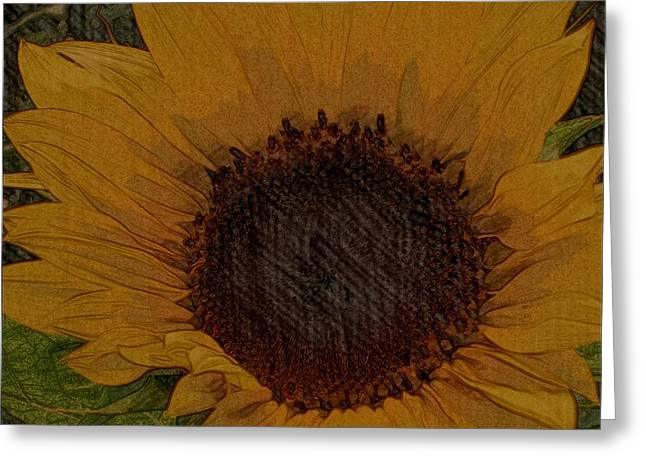 Nature Center Drawings Greeting Cards - Petals From The Sun Greeting Card by Constance Carlsen