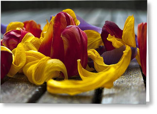 Petals Greeting Card by Svetlana Sewell